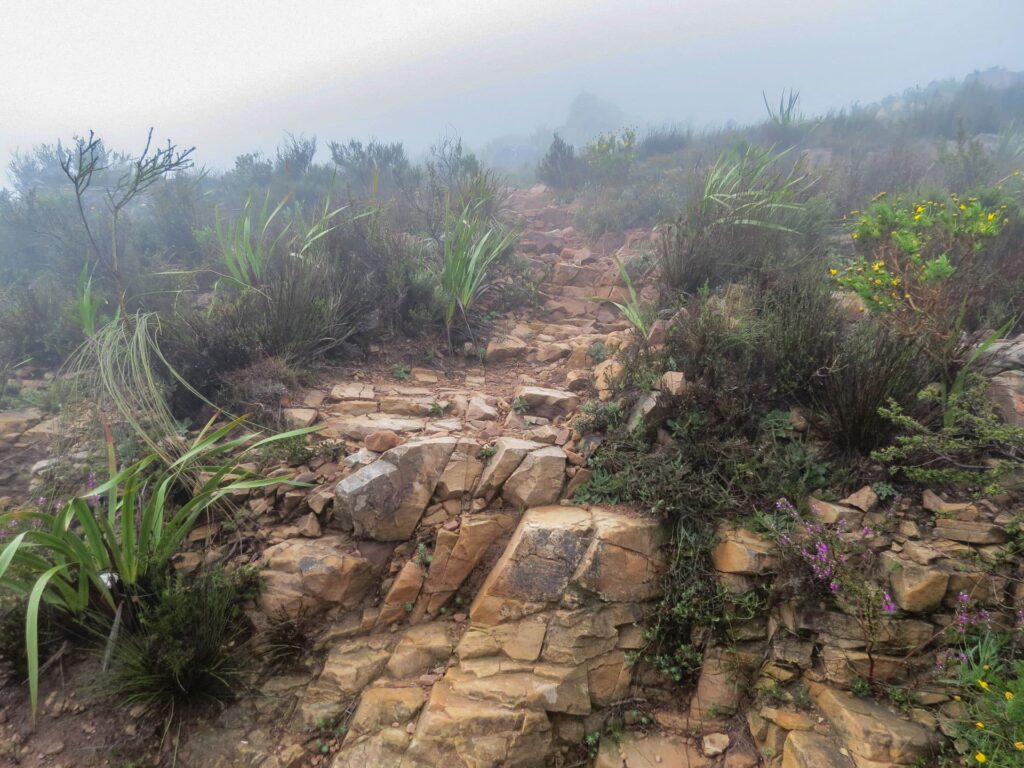 Hiking to the top of Lion's head near Cape Town